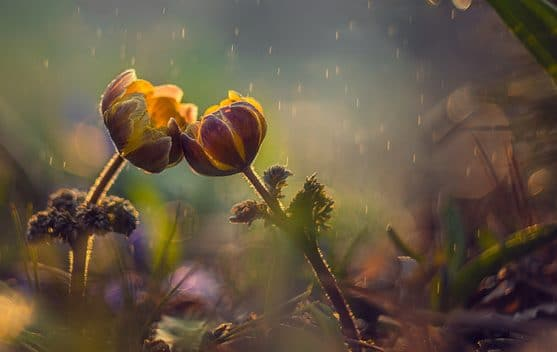 double flower e1579558811500