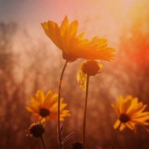 Inner Joy & Wellness Retreat