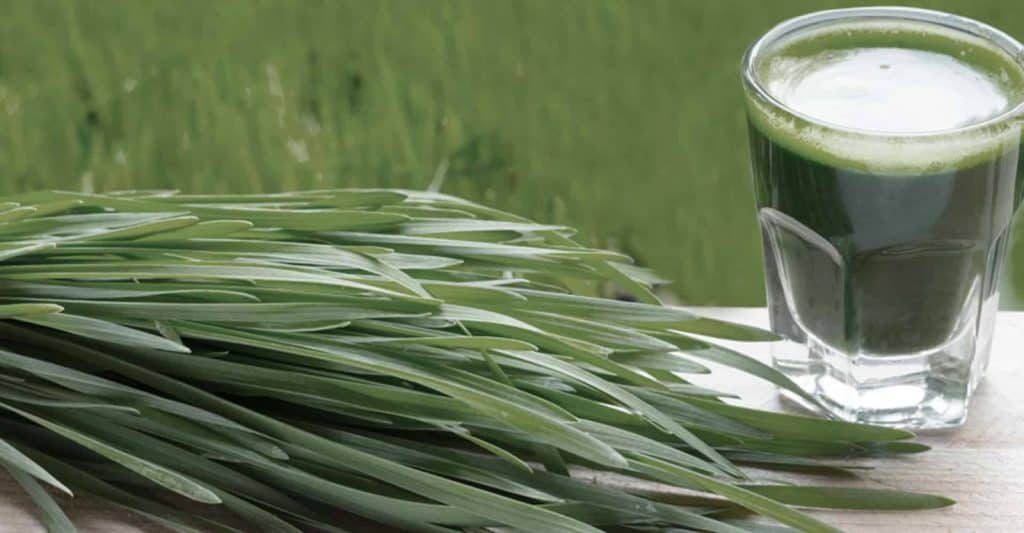 wheatgrass enema