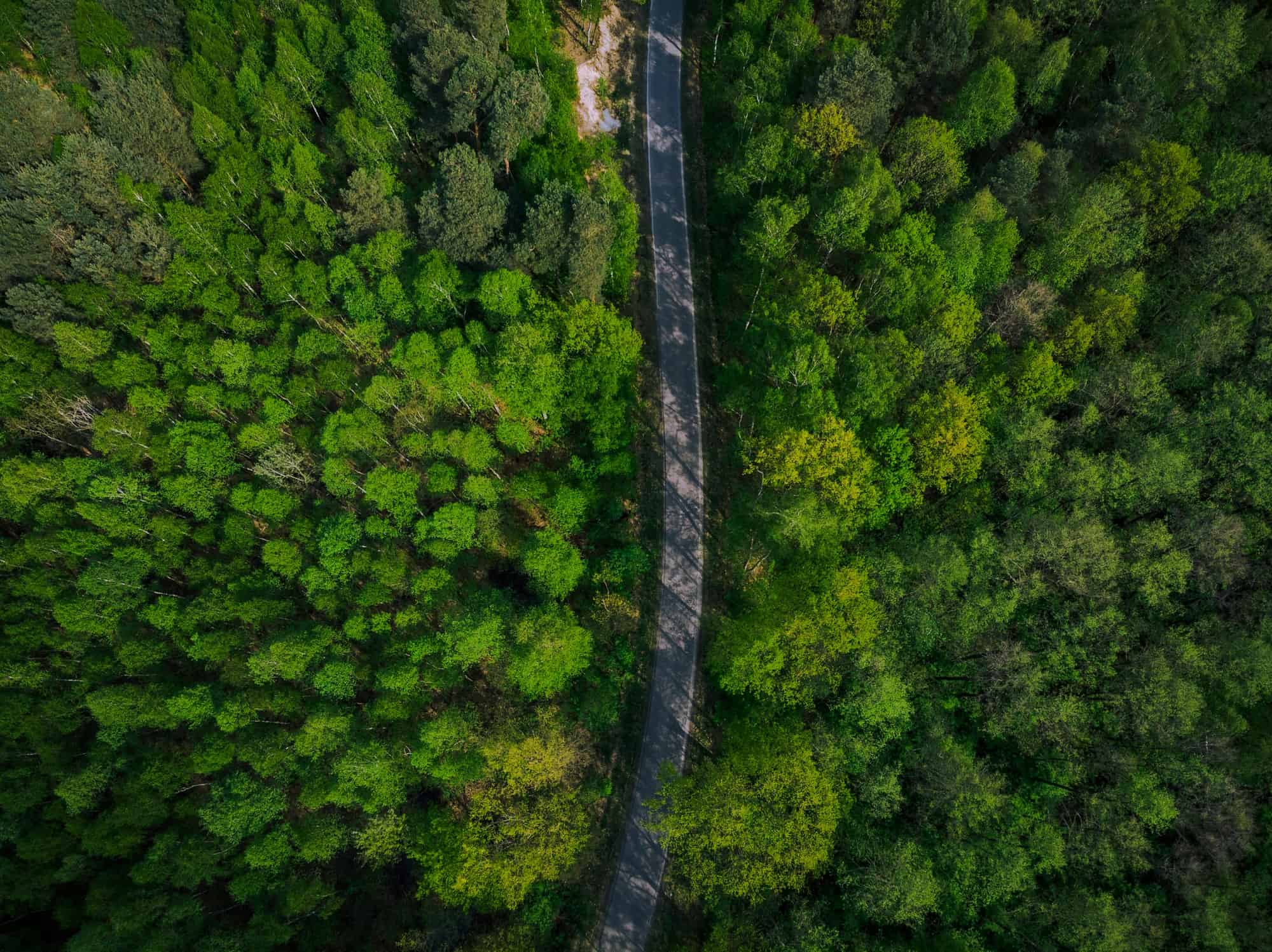 empty road trough spring pine forest aerial